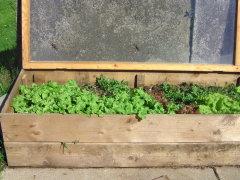 der erste Salat