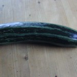 Zucchini-Salsa in Rohformat