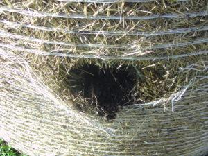 das Loch mit Kompost gefüllt